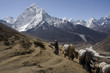 Nepalese landscape, Yaks against top Amadablan