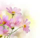 Fototapety Beautiful Floral Border.Flower design