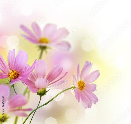piekna-kwiecista-granica-kwiat-projekt