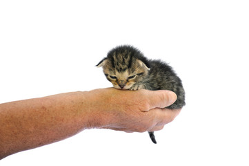 Senior's hand holding little kitten