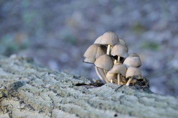 group of mushrooms