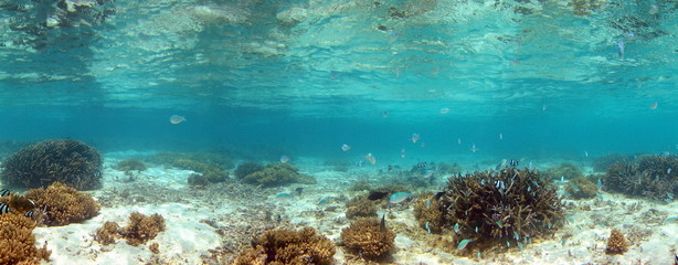 Panoramique du lagon de l'île Maurice.