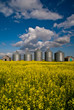 A row of steel grain bins in a field of yellow canola flowers