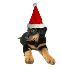 Cute santa puppy