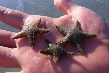 tre stelle marine