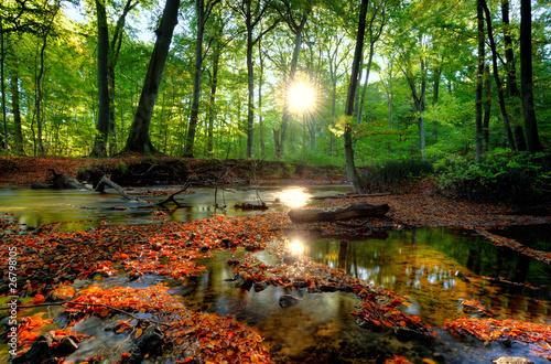 Fototapeten,licht,natur,orange,draußen