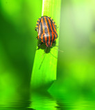 Fototapeta zielony - świeży - Insekt
