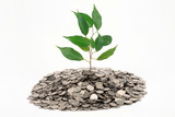 Tree with green leaves growing from a heap of coins