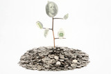 Monetary tree growing from coins