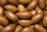 ripe pacan nuts background;