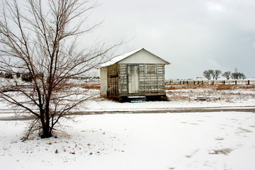 tree and old shed in winter