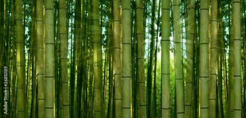 sunlight breaking through a bamboo forest