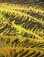 Rizière en terrasse, Guangxi - South China