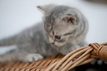 Junge Hauskatze Baby jung