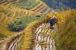 Paysan travaillant dans une rizière, Guangxi - South China