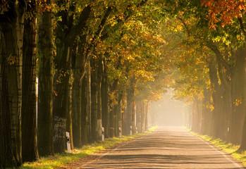 Allee im Herbst - avenue in fall 17
