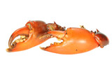 Two  Pincers Of Cooked Crab On White background poster