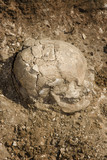Burial grave archeology ancient skull poster