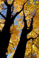 Fall in north america