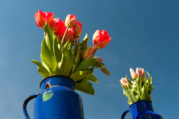 Blue cans with red tulips