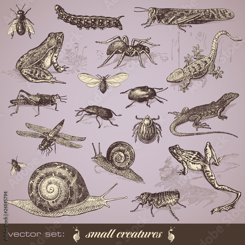vector set: small animals