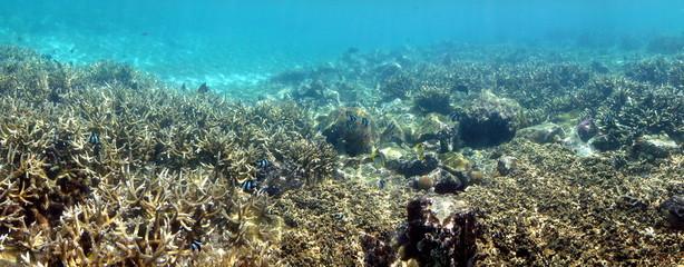 Coraux dans un lagon.