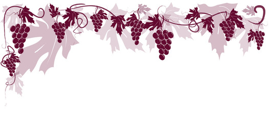 Vitigno uva rossa