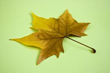 Hoja de otoño en fondo verde