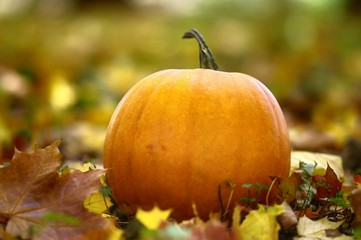 pumpkin in park