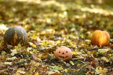 pumpkins in park