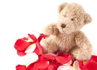Little Brown Teddy on Rose Petals