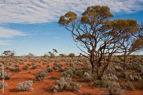 Leinwandbild Motiv the australian landscape, south australia
