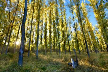 Sol en el bosque