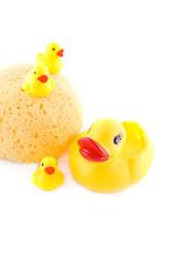 Sponge and rubber ducks