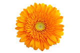 Perfect Orange Gerbera - without shadows