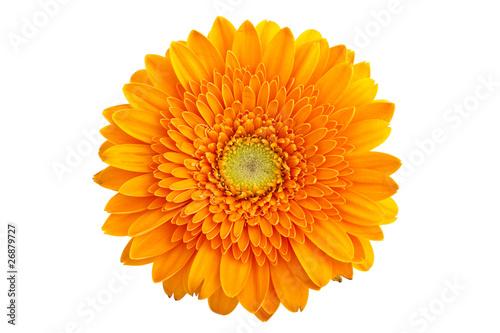 Foto op Plexiglas Gerbera Perfect Orange Gerbera - without shadows