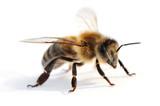 Fototapete Insekt - Honig - Insekten