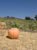 Pumpkin Showcase in Farmers Field poster