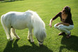 an image of a single white pony with woman