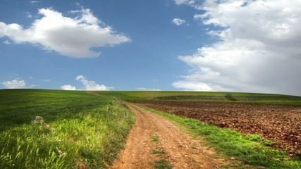 Crop field, environment concept