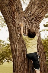 Child Climbs A Tree