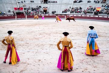 3 toreros (bullfighters) start the performance with the bull.