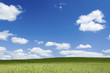 Field Green Fields Landscape blue summer sky and cloud