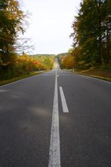 Straße durch den Wald im Herbst