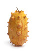 Whole single horned melon