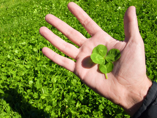 four-leaf clover in the human hand