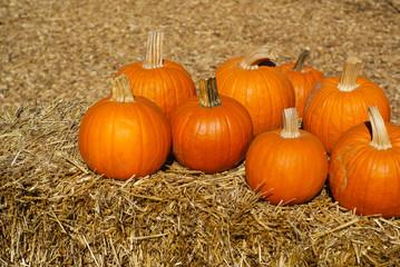 Ripe orange pumpkins on brown hay bales