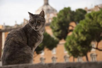 Gatto romano in Piazza di Torre Argentina