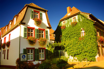 Old  german houses in ivy, Altstadt, Heidelberg, Germany