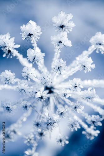 Frozen flower - 26962542